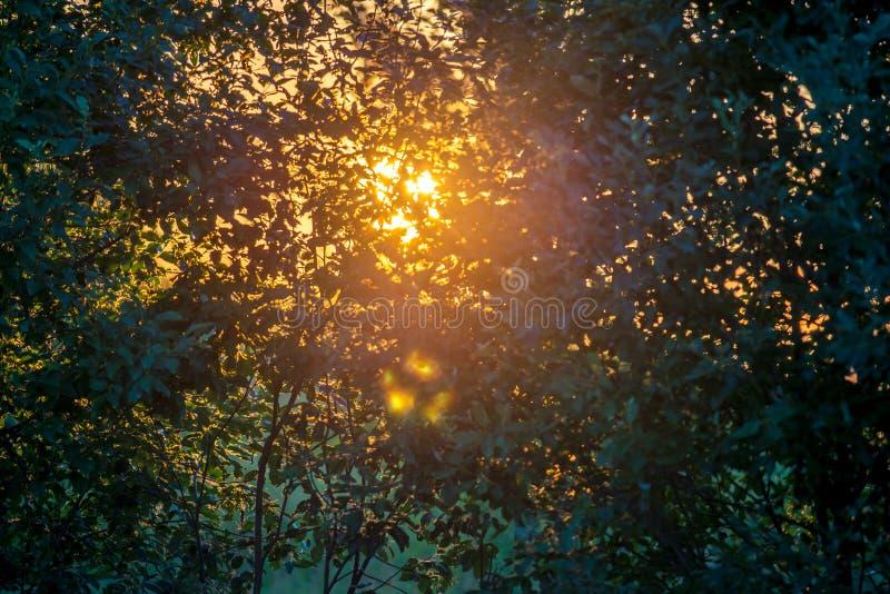 Bladeren en zonsondergang royalty-vrije stock afbeelding