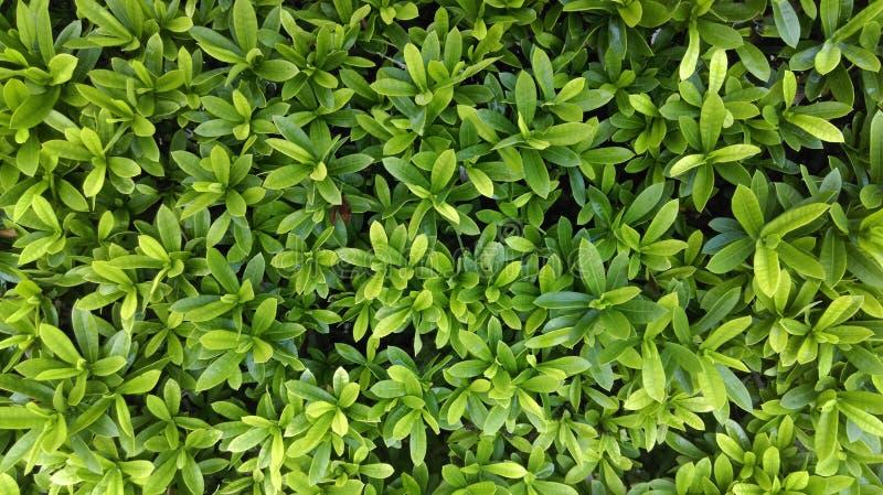 Bladeren groene installaties royalty-vrije stock afbeelding