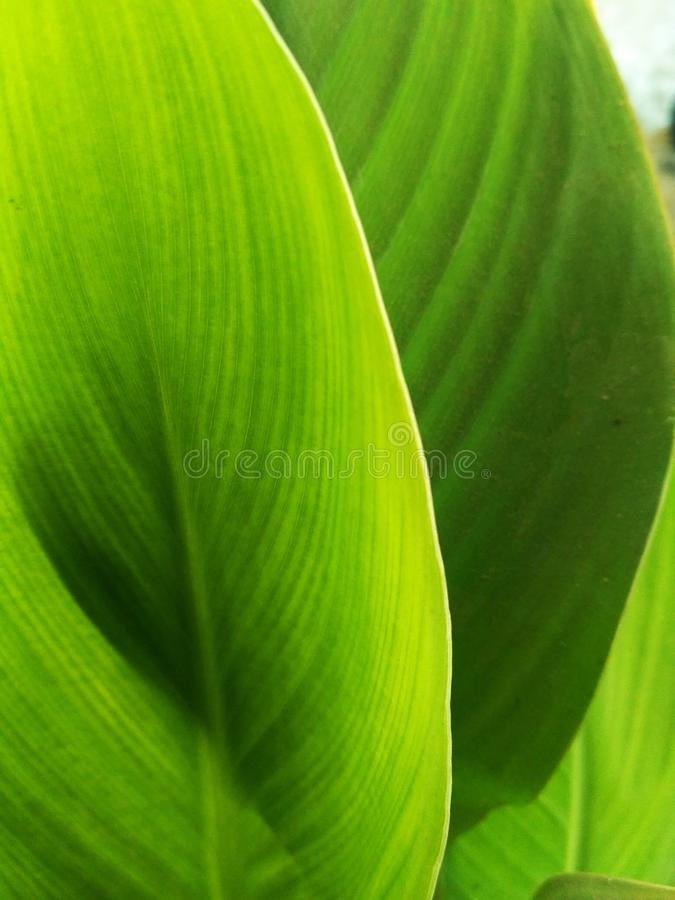 Bladeren groene samenvatting royalty-vrije stock fotografie