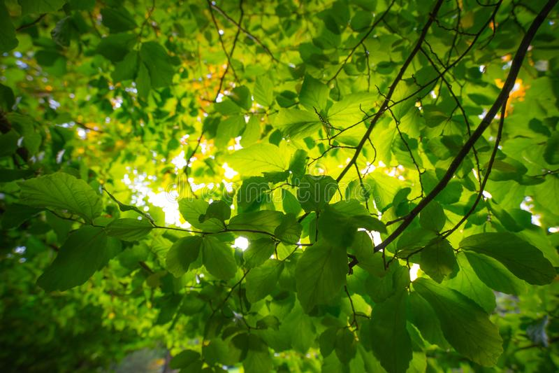 Bladeren in het openbare park stock foto
