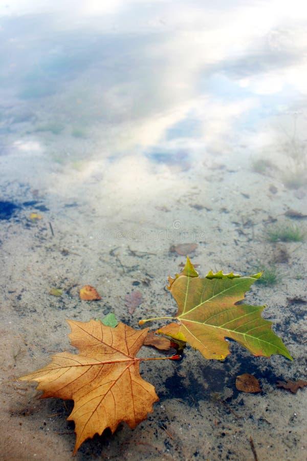 Bladeren in het Water royalty-vrije stock afbeelding