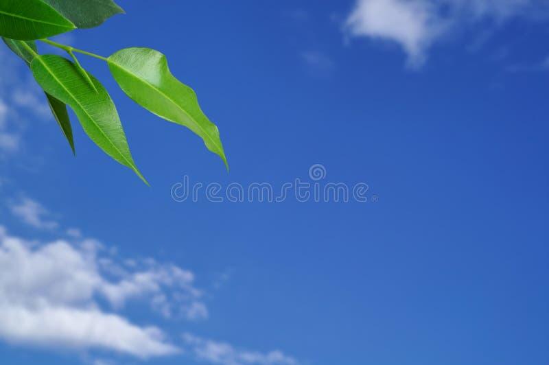 Bladeren met hemelachtergrond royalty-vrije stock foto's