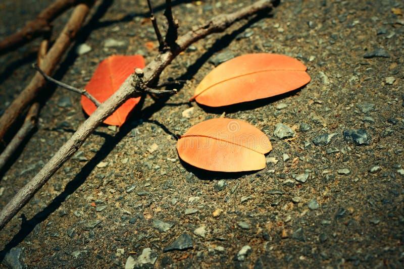 Bladeren met takken stock afbeeldingen
