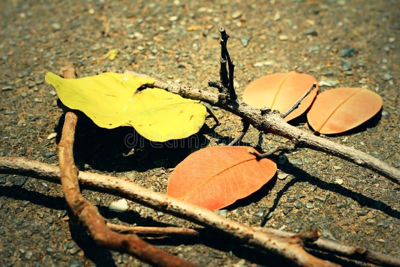 Bladeren met takken stock afbeelding