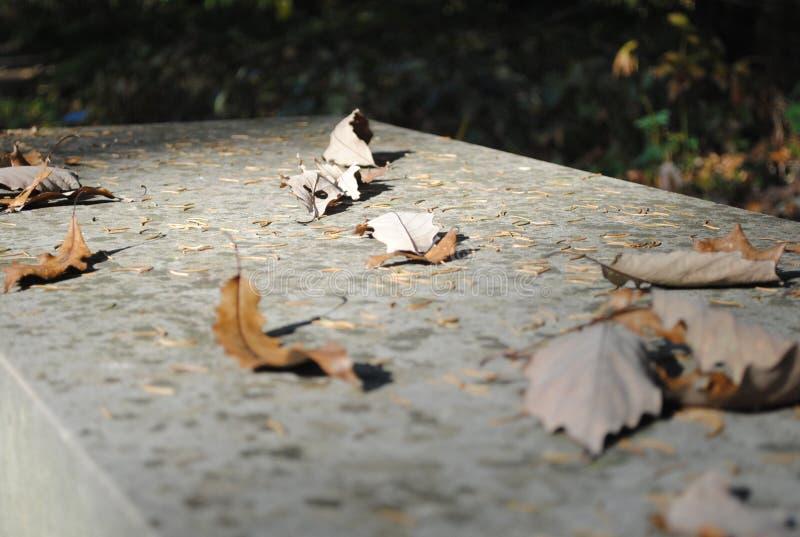 Bladeren op Bank stock foto