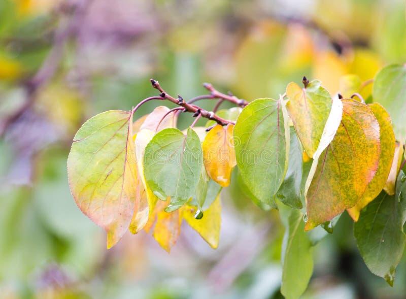 Bladeren op een boom in de herfst royalty-vrije stock foto's