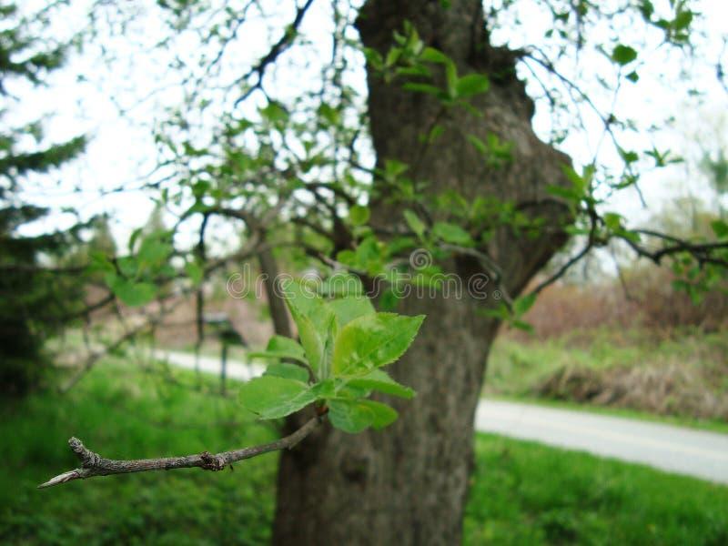 Bladeren op een boomtak stock afbeeldingen