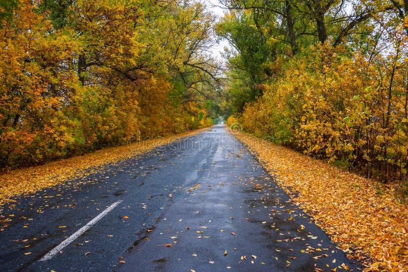 Bladeren op regenachtige weg stock foto's