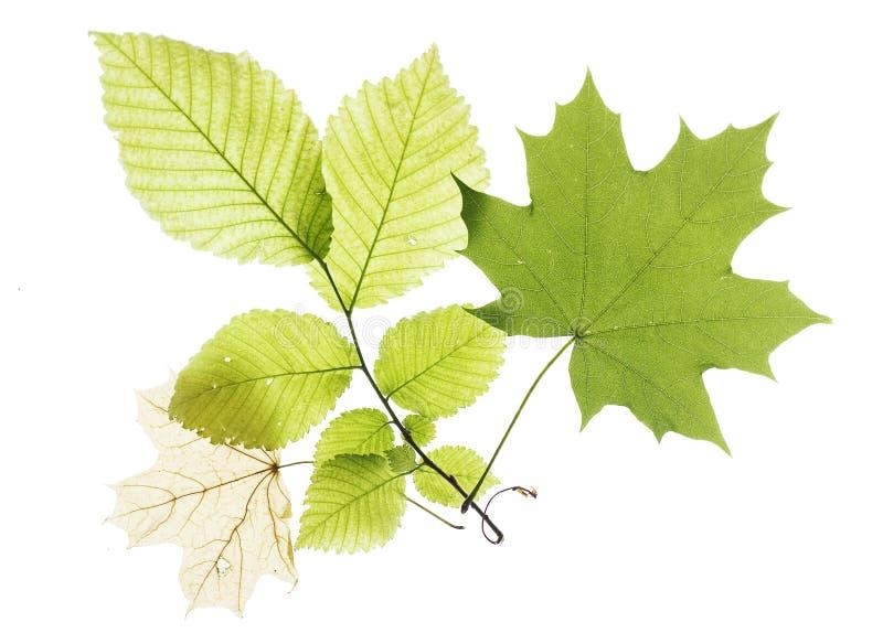 Bladeren op wit royalty-vrije stock afbeeldingen