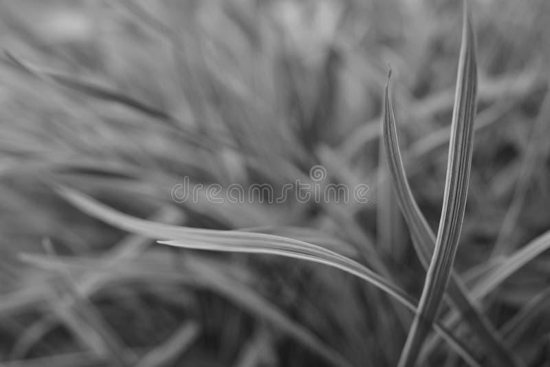 Bladeren op Zwart-wit stock fotografie