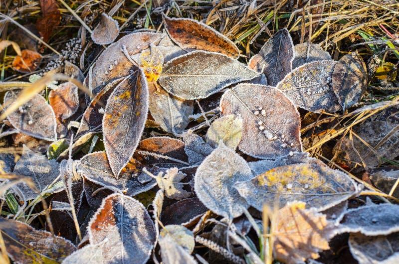 Bladeren in rijp. stock foto