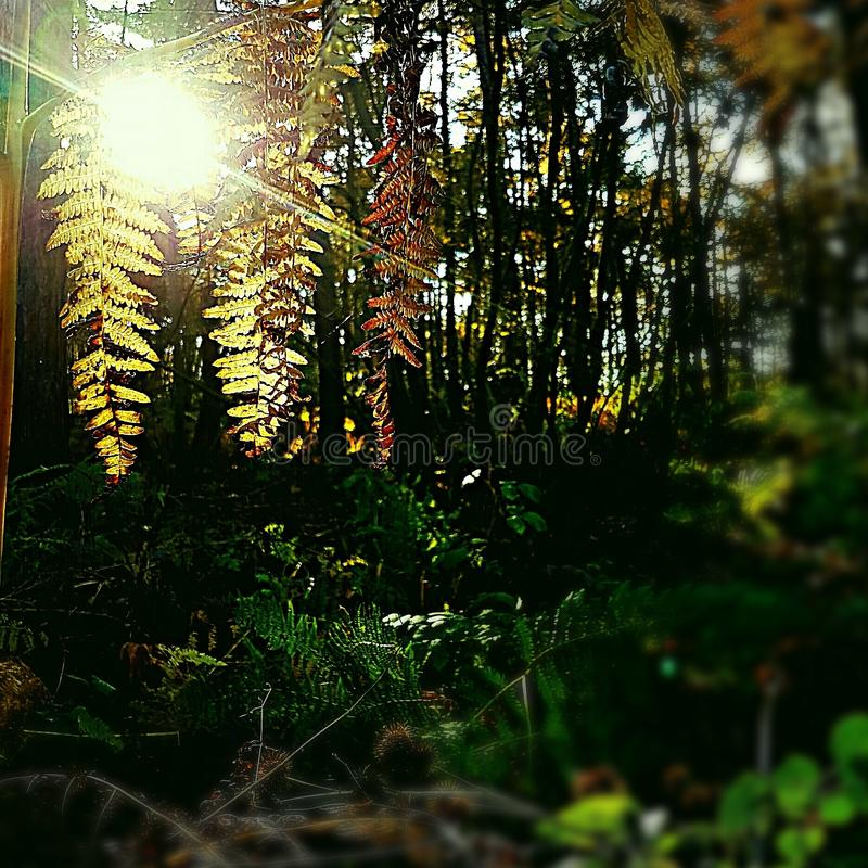 Bladeren in The Sun stock foto