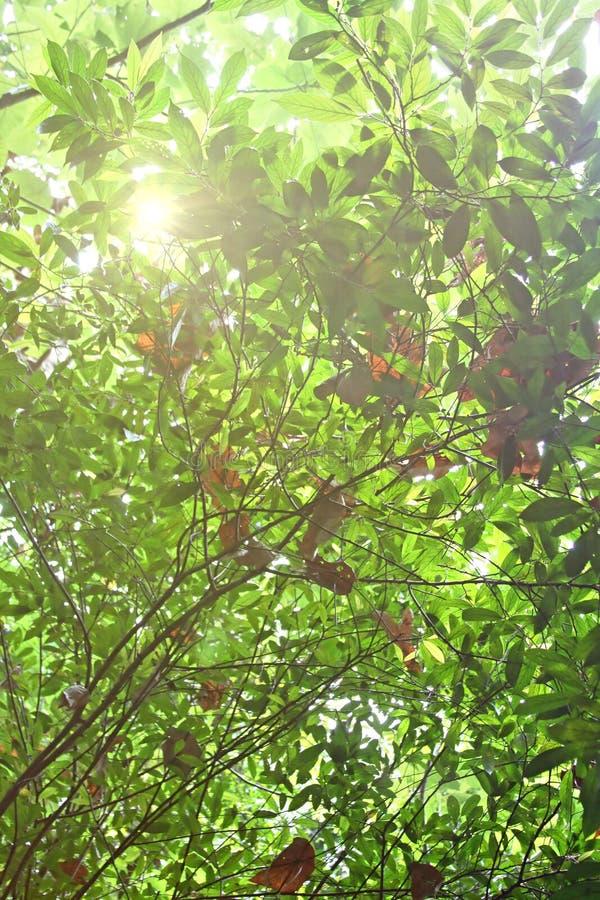 Bladeren tegen de ochtendzon stock foto