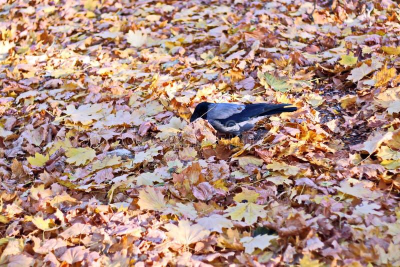 Bladeren ter plaatse in de herfst als achtergrond stock afbeelding