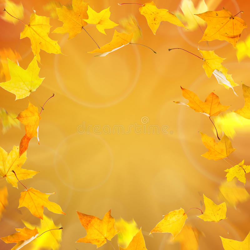 Bladeren van de de herfst de gele esdoorn royalty-vrije stock foto