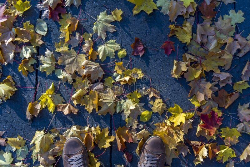 Bladeren van de de herfst liggen de gele esdoorn op asfalt Hoogste mening van mensen` s tennisschoenen stock foto's