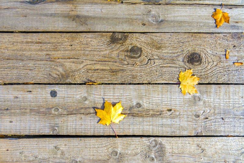 Bladeren van de de herfst liggen de gele esdoorn op de oude unpainted houten vloer stock foto