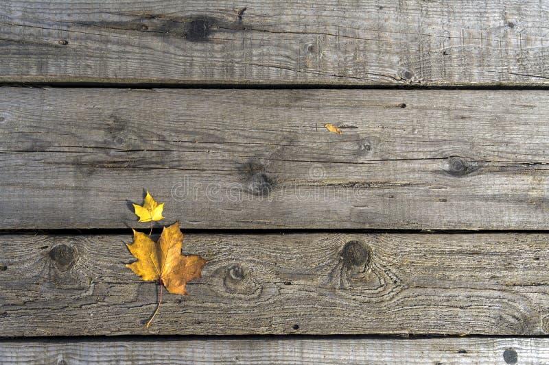 Bladeren van de de herfst liggen de gele esdoorn op de oude unpainted houten vloer stock fotografie