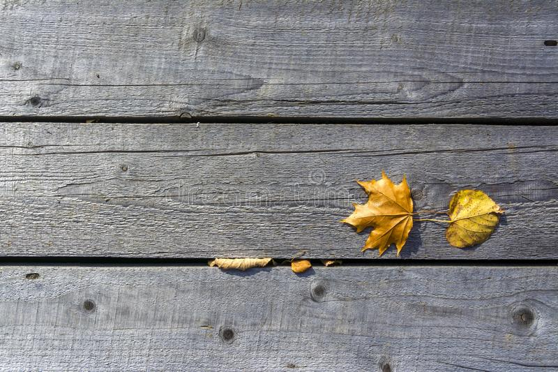 Bladeren van de de herfst liggen de gele esdoorn op de oude unpainted houten vloer royalty-vrije stock foto's