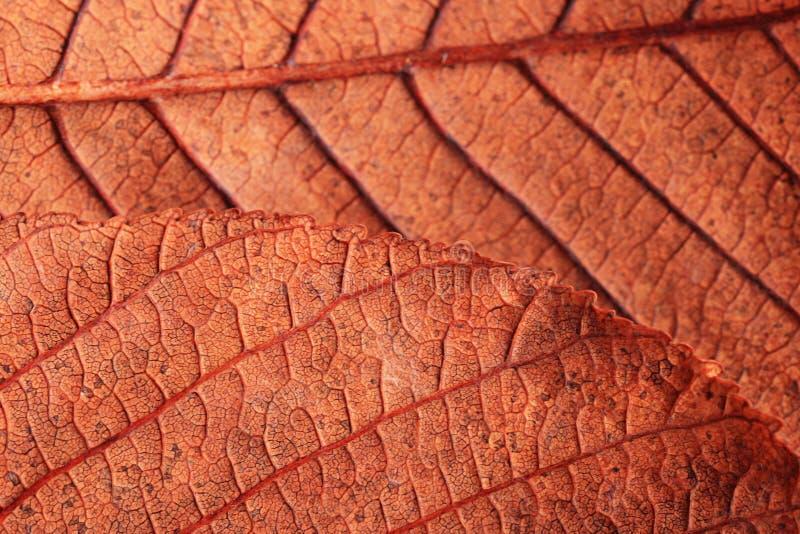 Bladeren van de textuur de oranje herfst stock foto