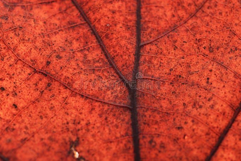 Bladeren van de textuur de oranje herfst stock afbeeldingen