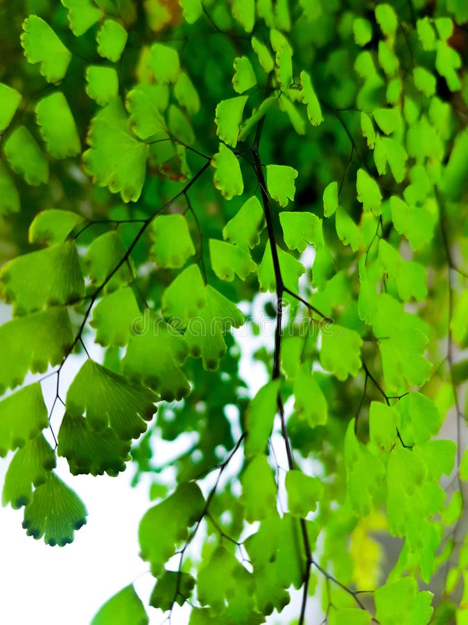 Bladeren van een tuininstallatie stock foto