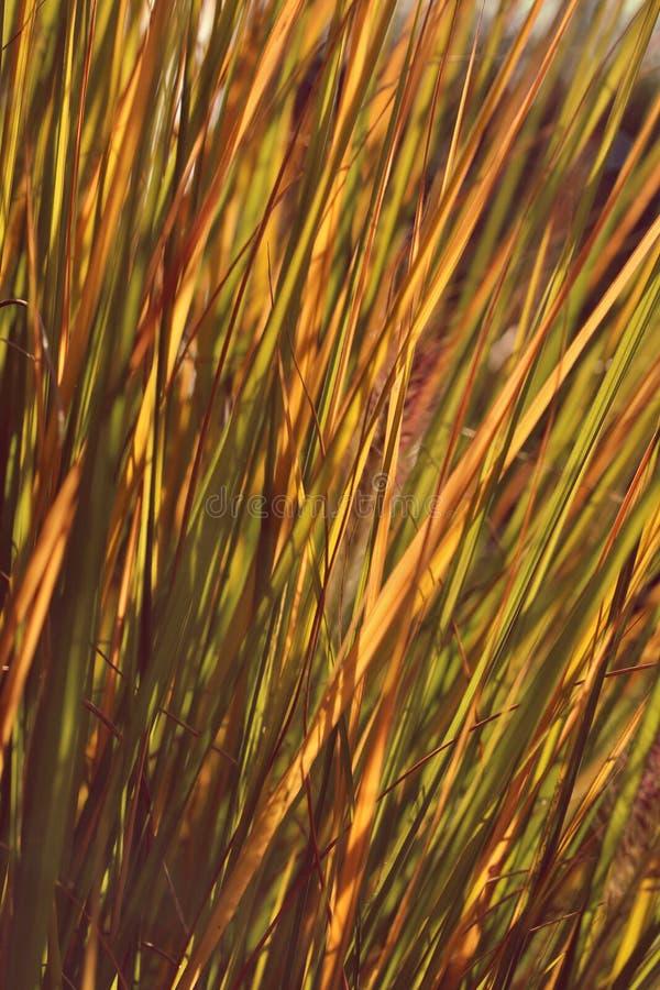 Bladeren van gras royalty-vrije stock afbeeldingen