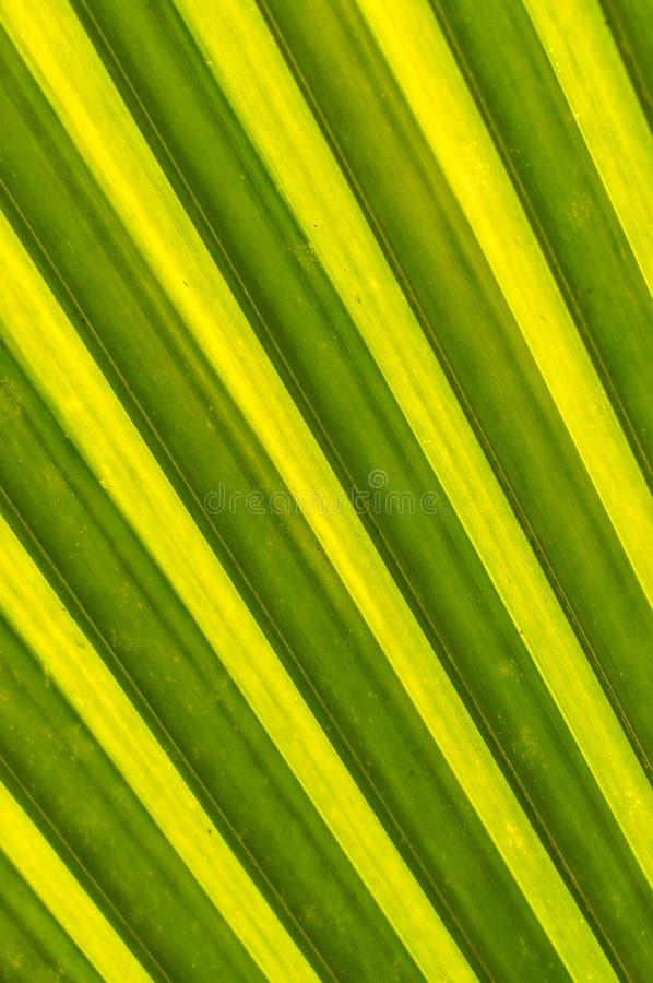 Bladeren van kokospalmen royalty-vrije stock foto