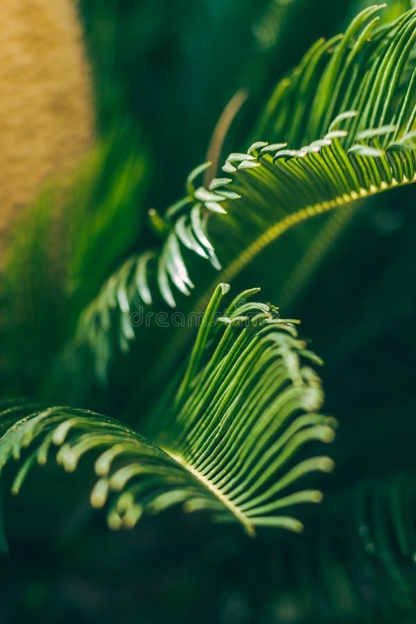 Bladeren van tropische palm drie Aardmacro Verticaal beeld stock foto