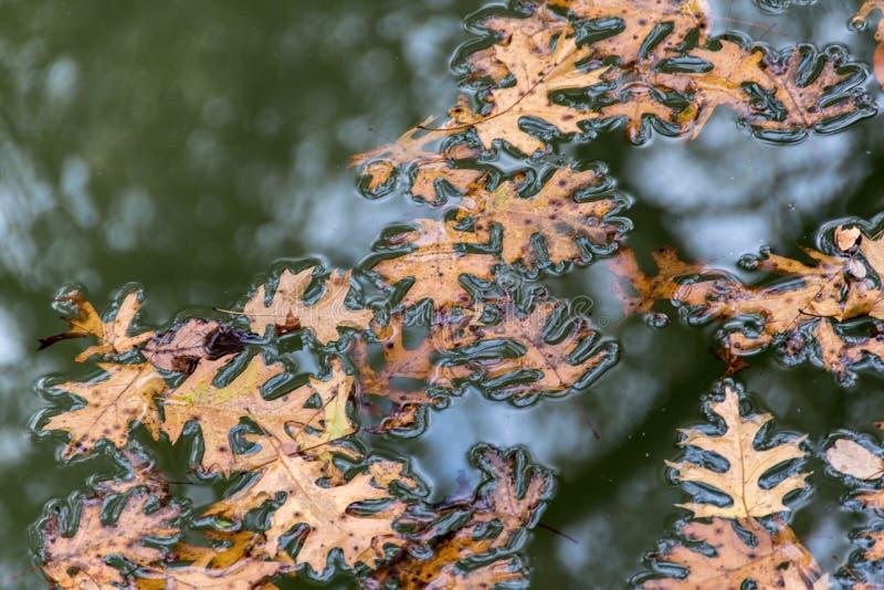 Bladeren in water stock afbeeldingen
