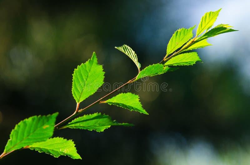 Bladeren in Zonsondergang stock foto's