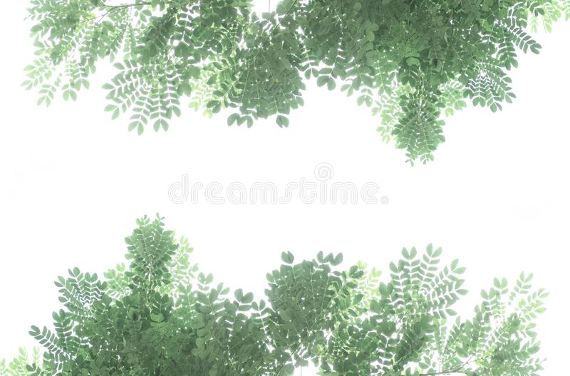 Bladerenkader op witte achtergrond wordt geïsoleerd die stock afbeelding
