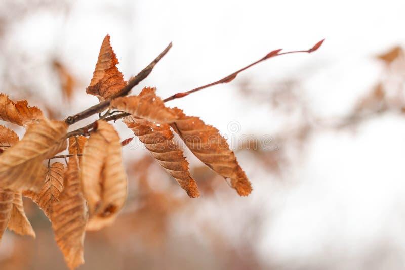 bladerenroest in de winter royalty-vrije stock afbeelding