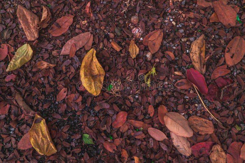 Bladerenstapel op de vloer royalty-vrije stock afbeeldingen