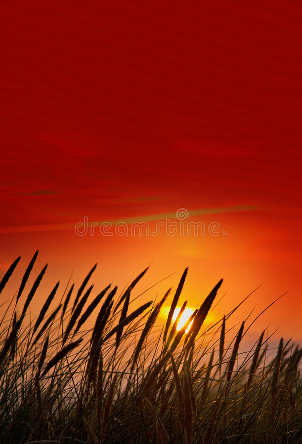 Download Blades of grass stock photo. Image of dusky, idyllic - 15057252