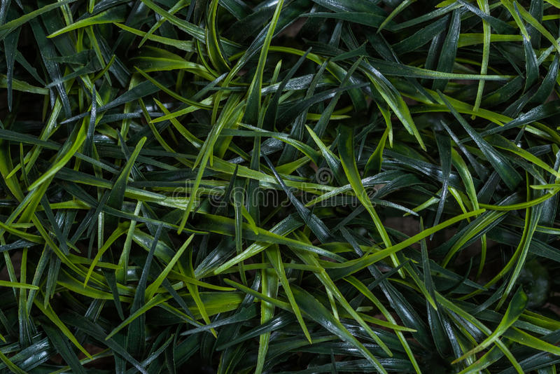 Download Blades of grass background stock photo. Image of macro - 89173838