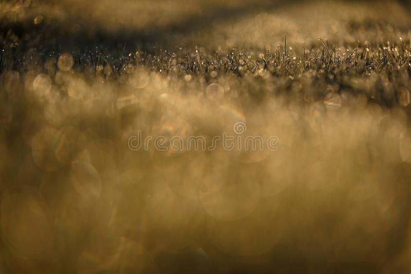 Frozen blades of grass in field royalty free stock photo