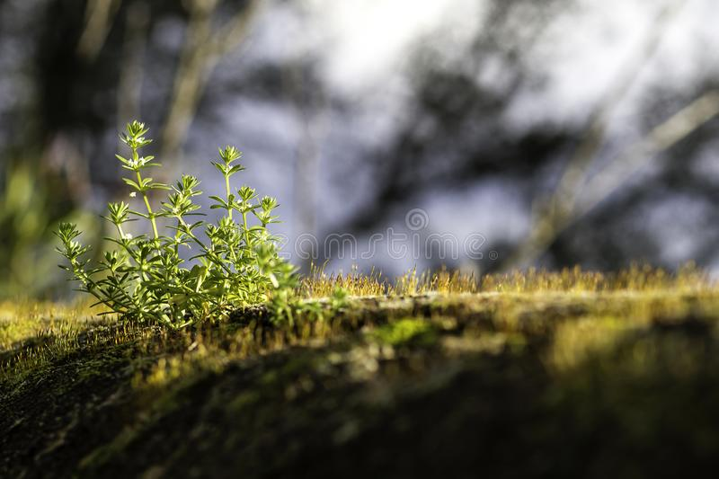 Blades of grass in a wall royalty free stock photo