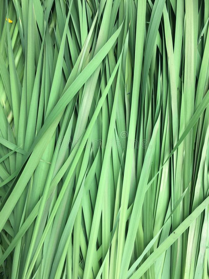 Blades (of grass) royalty free stock photos