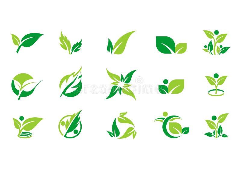 Bladet växten, logoen, ekologi, folket, wellnessen, gräsplan, sidor, uppsättning för natursymbolsymbol av vektorn planlägger stock illustrationer