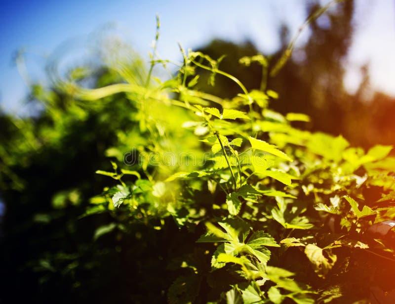 bladflygturer i solig dag royaltyfri fotografi