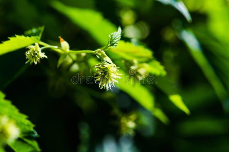 bladflygturer i solig dag royaltyfria bilder