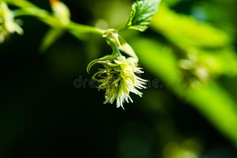 bladflygturer i solig dag arkivfoton