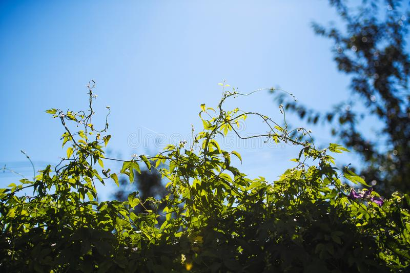 bladflygturer i solig dag arkivfoto