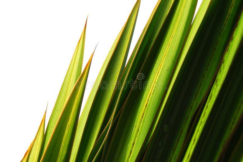 bladgräsgreen royaltyfri fotografi