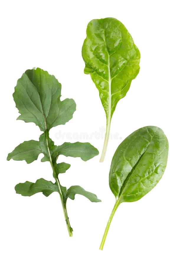 Bladgrönsaker arkivfoto