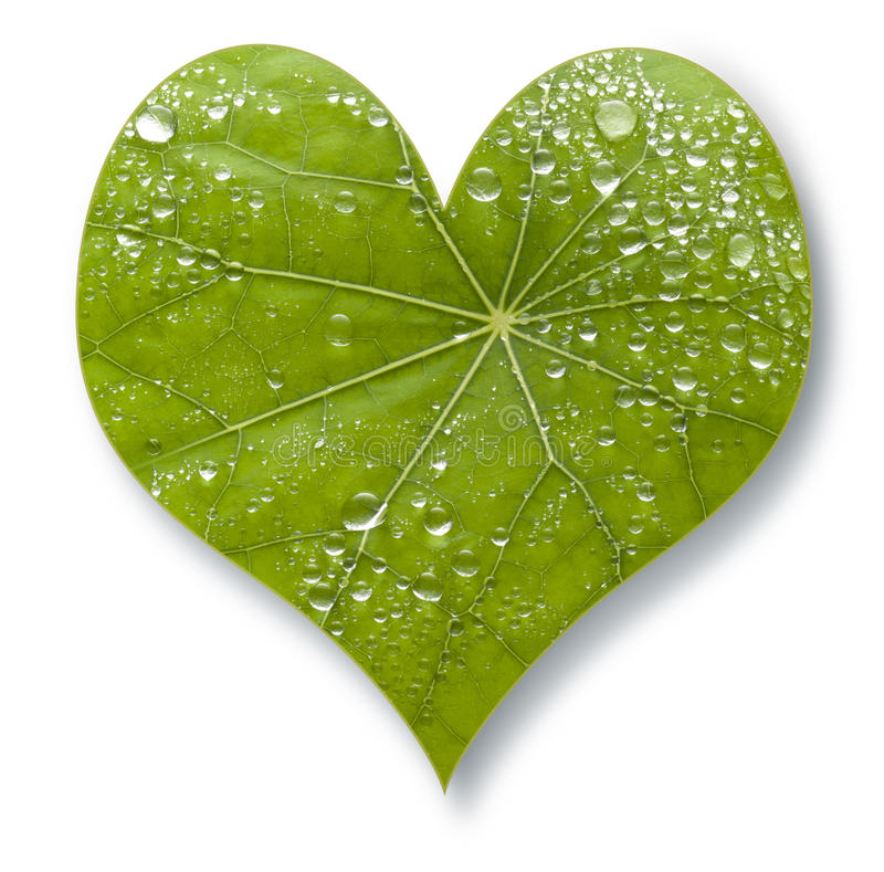 Bladhjärtaförälskelse arkivbilder