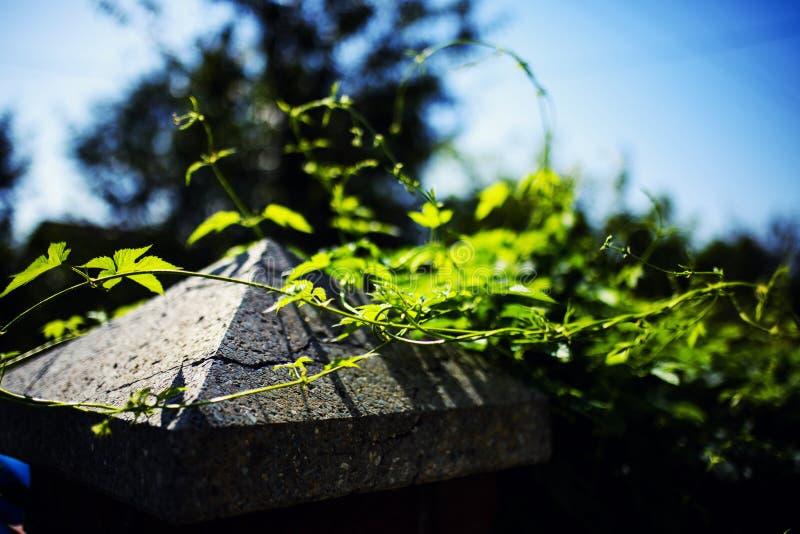 bladhop in zonnige dag royalty-vrije stock fotografie