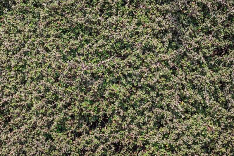 Bladpatroon van kleine boom met groene textuur royalty-vrije stock foto