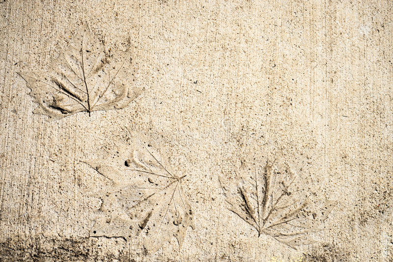 Bladtryck på betong arkivfoto